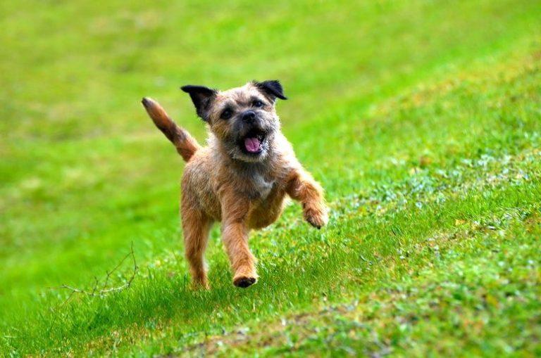Image result for border terrier 犬 抱きしめる