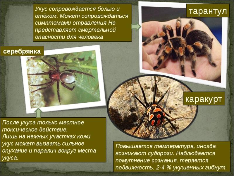 ce să faci când rănesc venele de păianjen