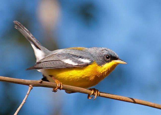 Картинки по запросу թռչյուններ