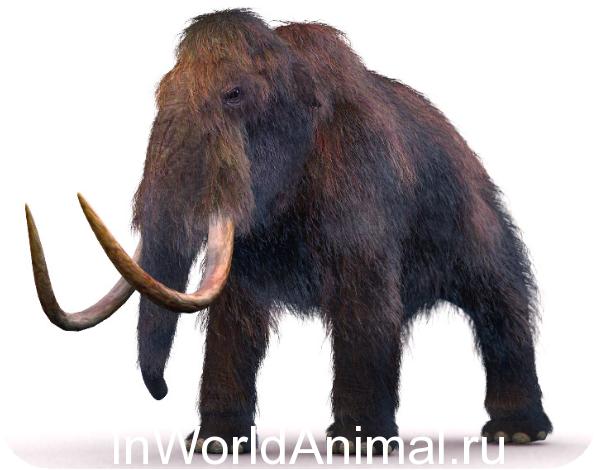 Dinoszaurusz csont szén társkereső